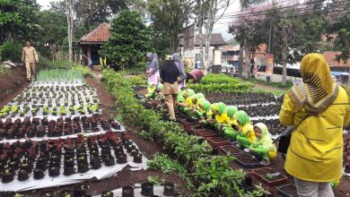 Photo of Kegiatan Little farming di cafe aria SMK PPN TANJUNGSARI