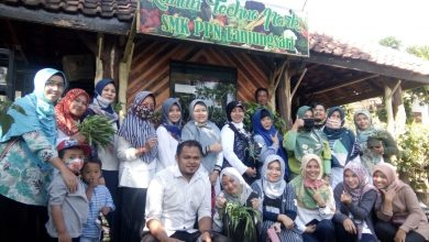 Photo of now …..vegetables harvest time at SMK PPN Tanjungsari little farm