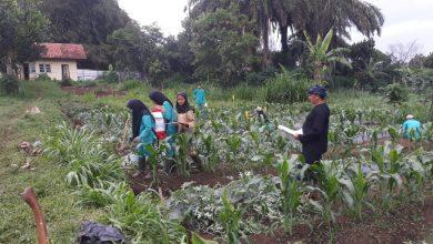 Photo of Pembelajaran kompetensi Keterampilan mapel agribisnis tanaman buah