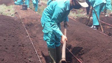 Photo of kegiatan Ujian Praktek siswa Semester Ganjil 2020 mapel Agribisnis tanaman buah