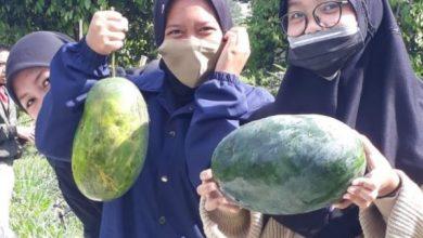 Photo of Praktik siswa Mata pelajaran Agribisnis tanaman Buah