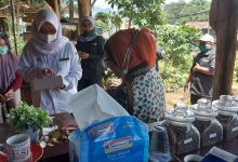 Photo of Kunjungan Kapala Pusat Pendidikan Pertranian (BPPSDMP) ibu Dr. Ida Widi Arsanti, SP. MP. beseta Rombongan di SMK PPN Tanjungsari